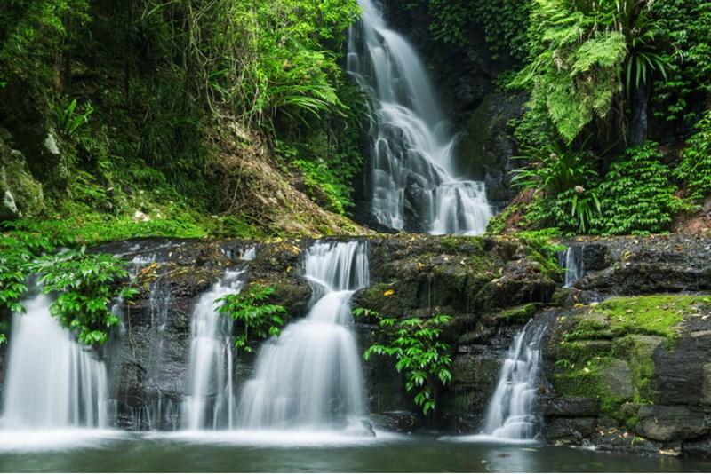 Le gondwana e la foresta pluviale australiana guida di - Gli animali della foresta pluviale di daintree ...