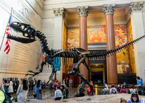 Museo Storia Naturale New York.Cosa Vedere A New York In 4 Giorni Guida Di Viaggio
