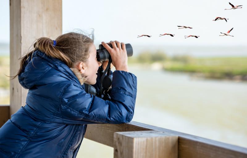 Incontri birdwatching